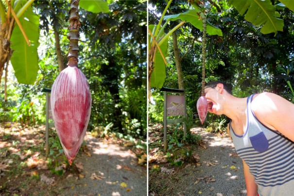 Welcome to the rainforest, don't eat the fruit