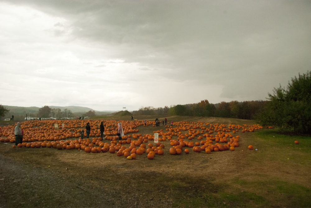 Somehow this seems like a fitting pre-Halloween pumpkin patch