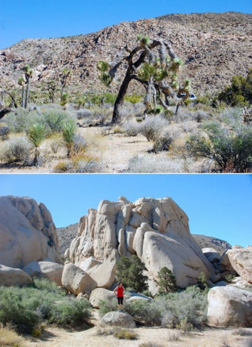 Alright, time to head out! Goodbye Joshua Tree