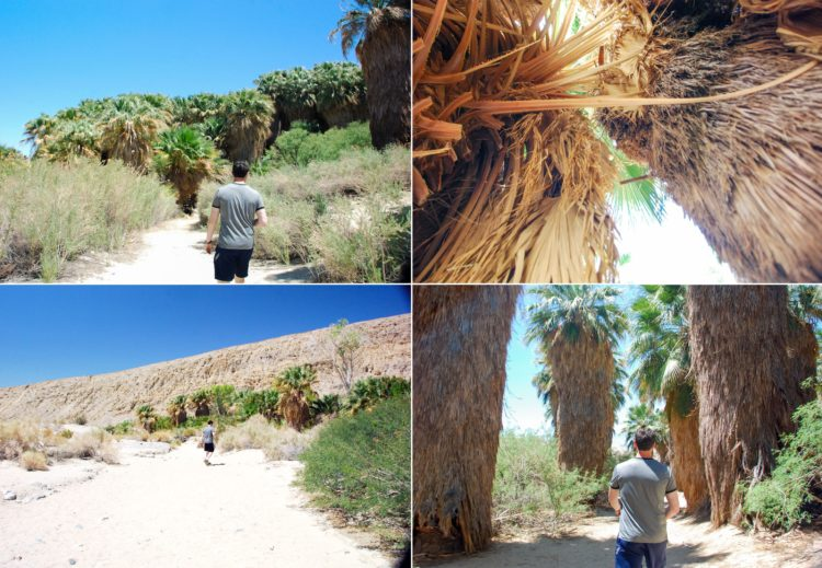 We made our way through this literal, Oasis in the desert