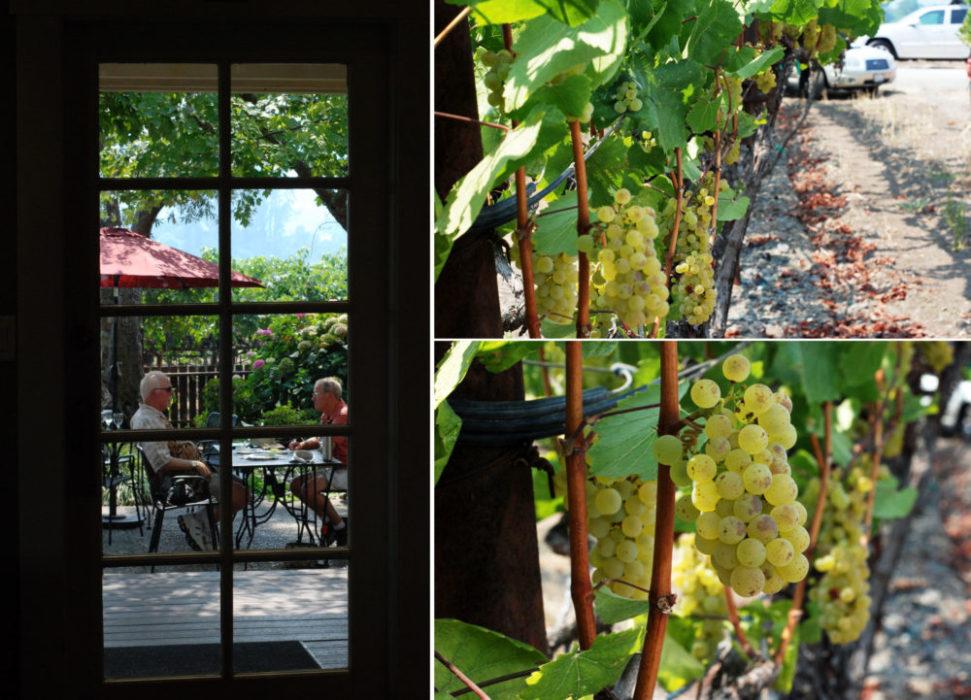 Grapes, grapes grapes