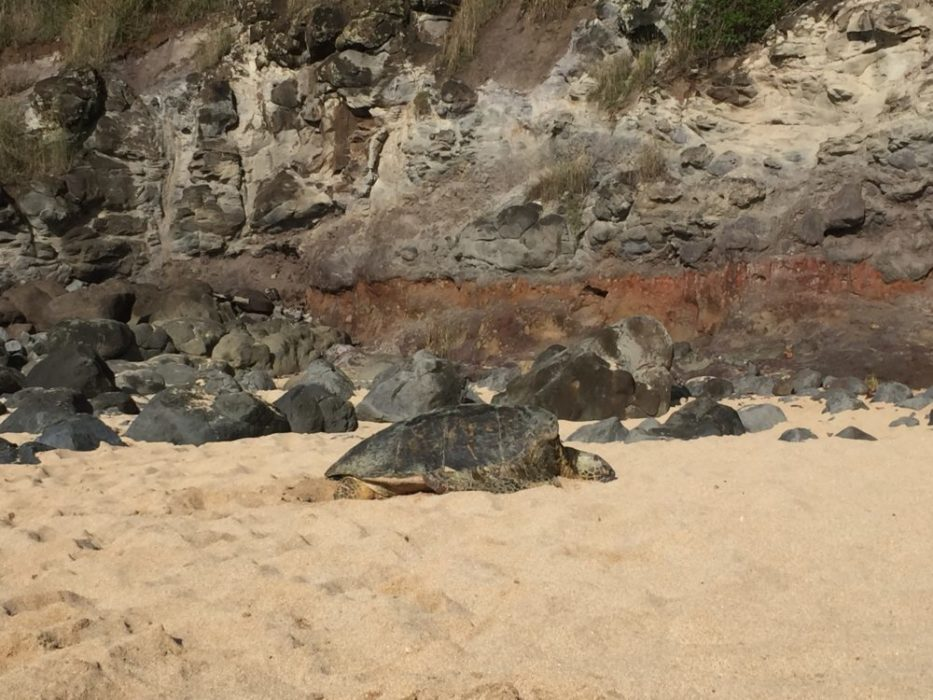 There were turtles on the beach