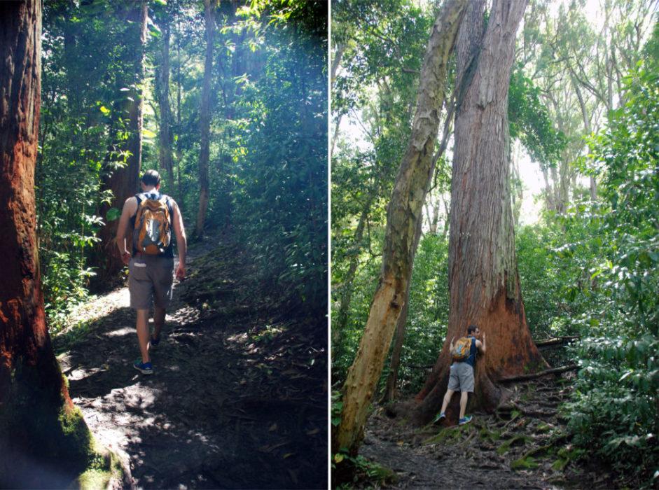 there were nice trees to hug