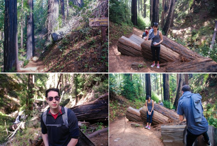 And it's really hard not too with all these redwoods
