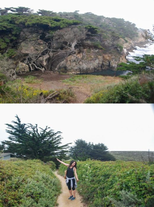 This trail is the sea lion trail