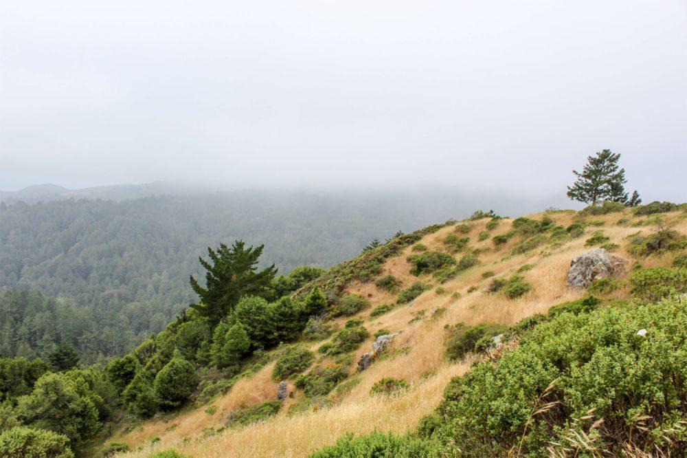 Mount Tamalpais Sunday Hike Mill Valley Ca