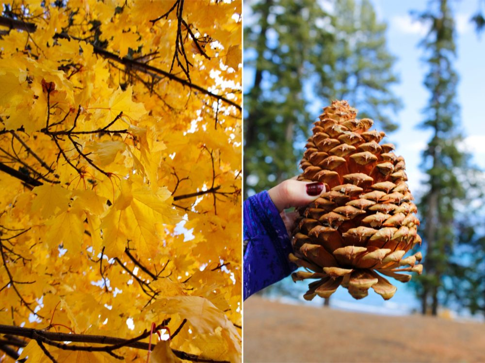 I found this massive pinecone